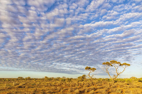 Australia, South Australia, View from Stuart Highway at white fluffy clouds over plain - FOF12106