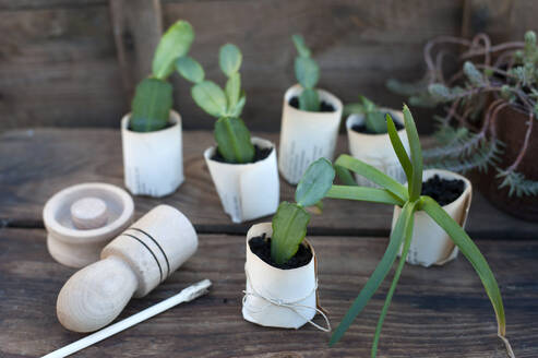 Plant potted in paper flower pot on wooden box - GISF00763