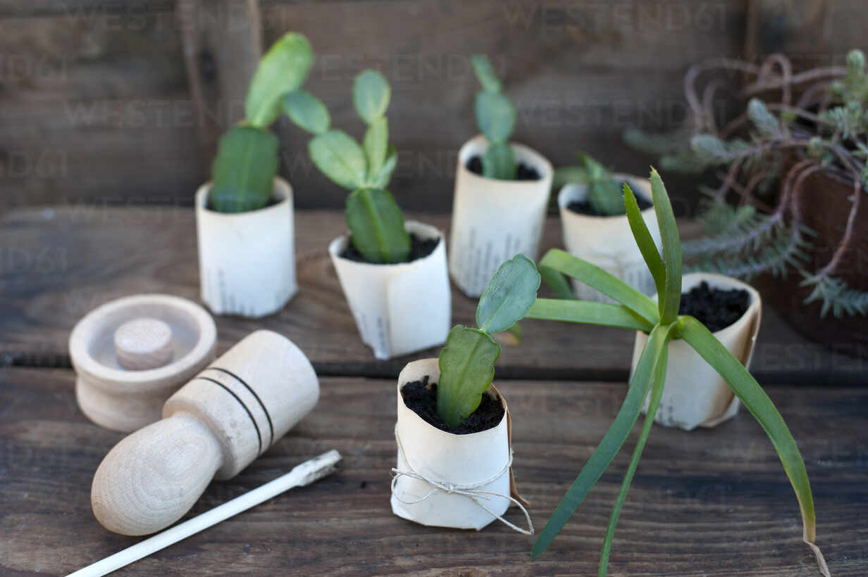 Plant potted in paper flower pot on wooden box - GISF00763 - Gianna Schade/Westend61