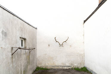 Antler on wall  - DRF01762
