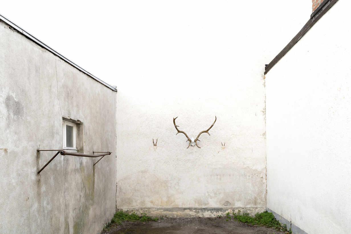 Hirschgeweih - DRF01762 - Stefan Rupp/Westend61