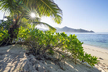A famous tropical beach with Palm Trees at Baie Lazare. Baie Lazare, Mahe, Mahe Island, Seychelles, Indian Ocean, Africa. - RUEF03216