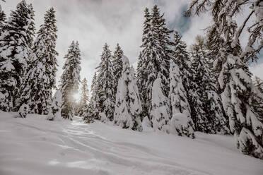Skitour mit viel Neuschnee. Österreich, Kärnten, Gerlitzen (Berg), Villach - DAWF01781