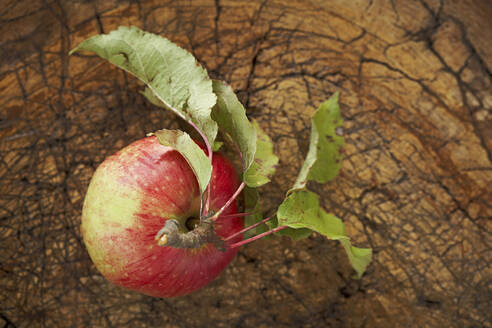 Ripe apple lying on wooden surface - SABF00066