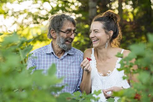 Deutschland, Hessen, Wiesbaden, Vater und Tochter pflücken Johannisbeeren im eigenen Garten, Familie, Nachhaltigkeit, bewusste Ernährung, Natur - AKLF00105